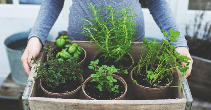 Des plantes toniques pour vous mettre d'aplomb!
